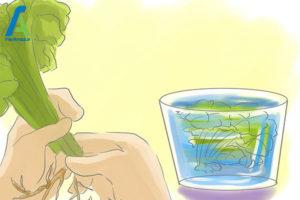 10 مراقبت از گل شمعدانی