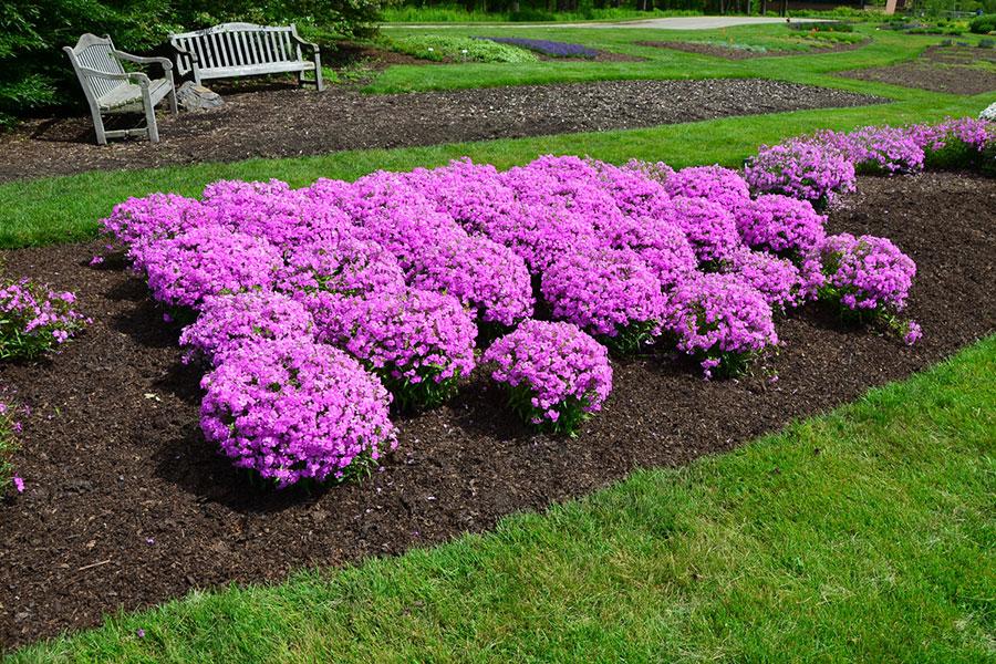 12 تکثیر گل فلوکس