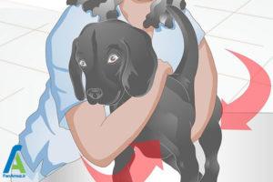 11 نحوه تیمار کردن سگ خانگی