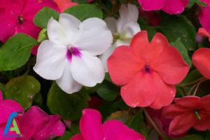 13 گل های ایمن برای افراد آلرژیک