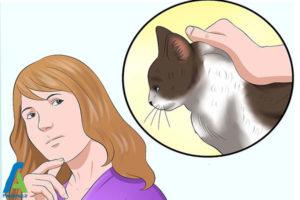 13 اصول صحیح بغل کردن و حمل گربه
