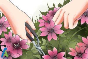9 پرورش گل کلماتیس در گلدان