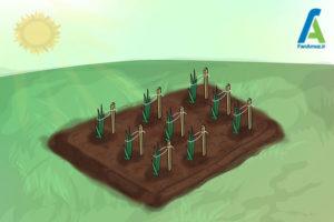14 پرورش گل گلایول