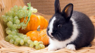 Photo of آموزش تهیه غذاهای خانگی مناسب خرگوش