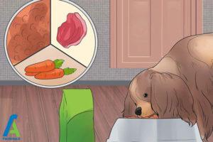 12 تربیت و نگهداری از سگ کوکر اسپانیل