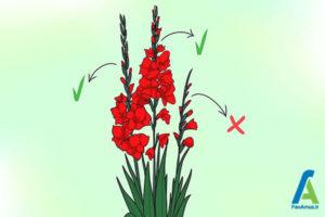 15 پرورش گل گلایول