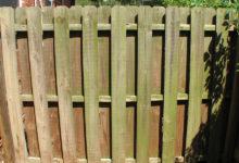 Photo of چگونه قارچ، کپک و جلبک روی حصارهای چوبی را از بین ببریم؟