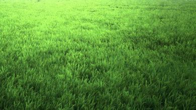 Photo of اصول صحیح کاشت چمن برای تسریع در رشد