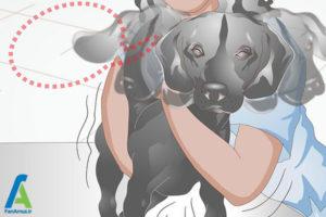 13 نحوه تیمار کردن سگ خانگی