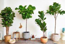 Photo of راهنمای انتخاب و خرید بهترین و مناسب ترین گل و گیاه مصنوعی