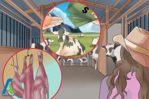 7 احداث مزرعه پرورش گاو