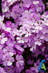 15 معرفی گل های تابستانی