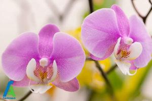 16 گل های ایمن برای افراد آلرژیک
