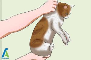 16 اصول صحیح بغل کردن و حمل گربه