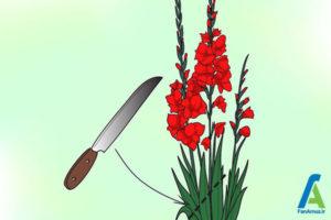 16 پرورش گل گلایول
