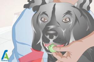 14 نحوه تیمار کردن سگ خانگی