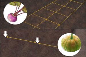 12 ساخت باغچه سبزیجات در خانه