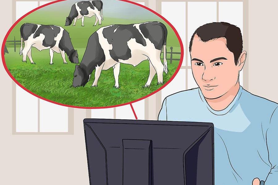 8 احداث مزرعه پرورش گاو