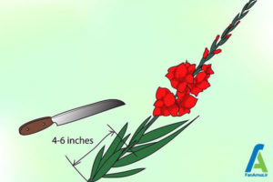 17 پرورش گل گلایول
