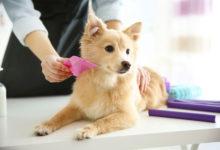 Photo of چگونه سگ خانگی را تمیز و تیمار کنیم؟