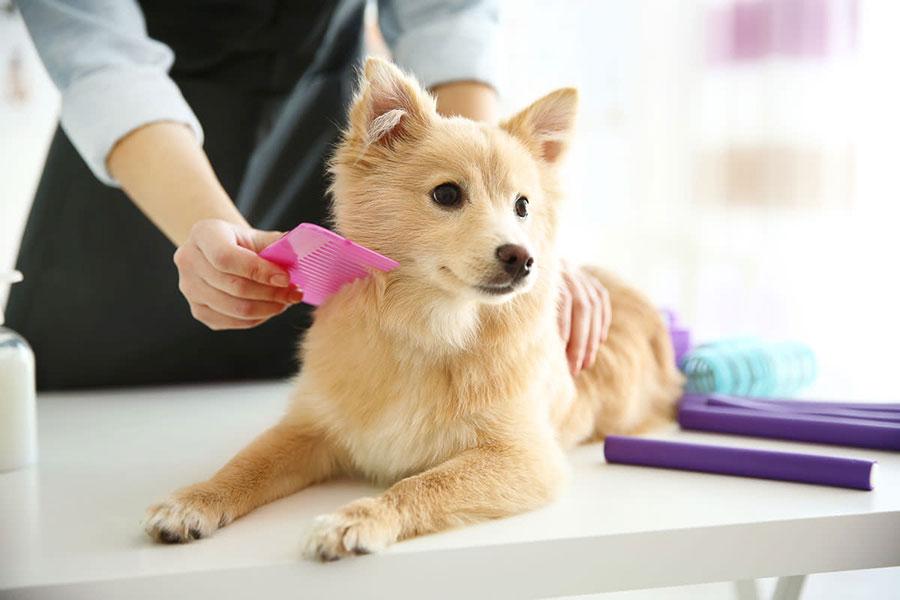 15 نحوه تیمار کردن سگ خانگی