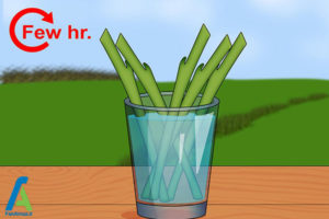 10 روشهای تسریع در رشد گیاهان
