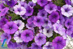 17 گل های ایمن برای افراد آلرژیک