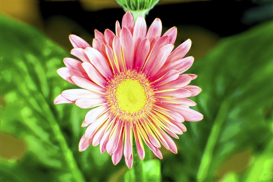 7 مراحل پرورش گل مینا