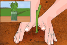 Photo of چگونه باعث تسریع در ریشه کردن و رشد گیاه شویم؟