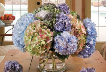 Photo of روش های خشک کردن گل ادریسی Hydrangeas