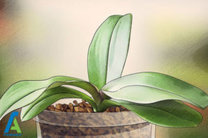 2 اصول نگهداری و پرورش فالانوپسیس