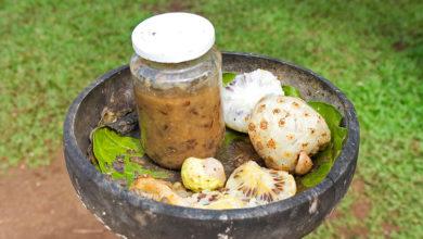 Photo of بهترین فواید شربت نونی Noni یا توت هندی برای سلامتی