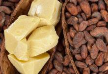 Photo of فواید کره کاکائو برای پوست و نحوه استفاده از آن