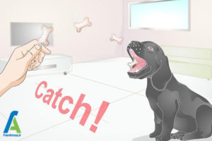 2 آموزش سگ برای نگهداشتن استخوان
