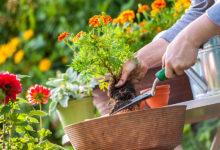 Photo of چرا باغبان ها عمر طولانی تری دارند؟