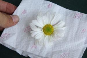 1 خشک کردن گل ها