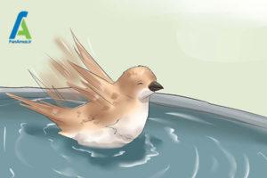 1 حمام کردن پرندگان خانگی