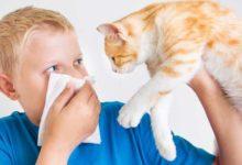 Photo of علائم حساسیت کودک به گربه چیست؟