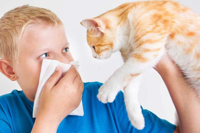 2 حساسیت کودک به گربه