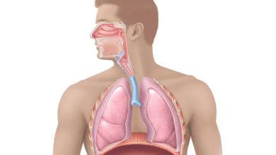 Photo of چگونه دستگاه تنفس از خود در مقابل ذرات مضر معلق در هوا دفاع می کند؟