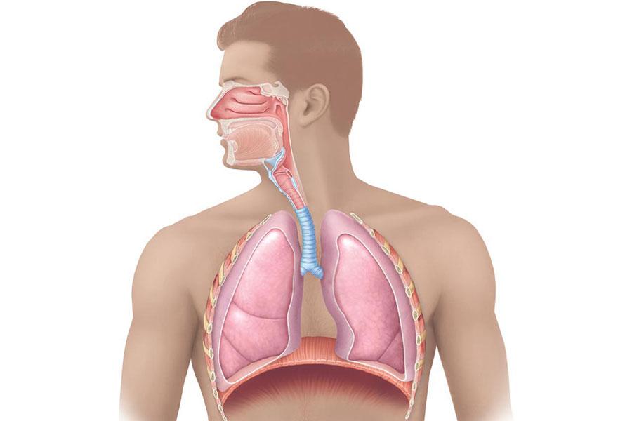 2 عملکرد دفاعی دستگاه تنفسی در مقابل ذرات