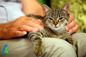 2 انتخاب گربه بزرگسال به عنوان حیوان خانگی