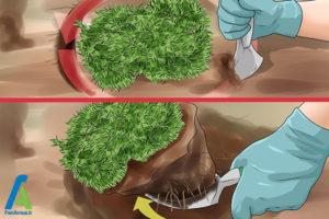 2 تکثیر گل فلوکس