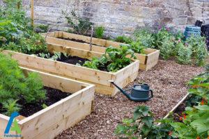 2 افزایش باردهی سبزیجات