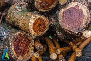 2 معرفی انواع چوبی که نباید بسوزانیم