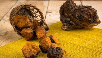 Photo of خواص، فواید و نحوه استفاده از قارچ چاگا Chaga