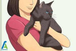 2 اصول صحیح بغل کردن و حمل گربه
