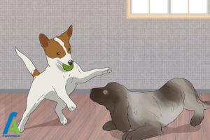 2 تربیت و نگهداری از سگ کوکر اسپانیل