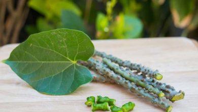 Photo of خواص و فواید داروی گیاهی گودوچی چیست؟