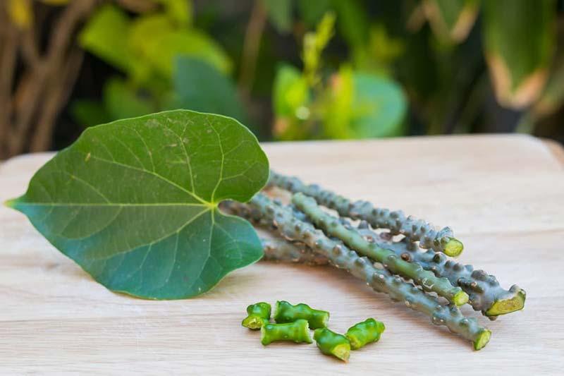 2 مزایای مصرف گیاه گودوچی
